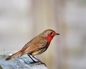 moxiebird1